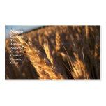 Campo de trigo - tarjetas de visita