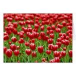Campo de tulipanes felicitación