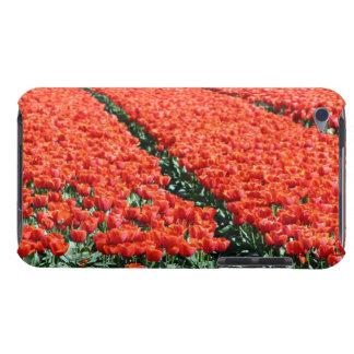 Campo de tulipanes funda para iPod de barely there