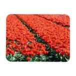 Campo de tulipanes imán flexible