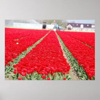 Campo de tulipanes posters