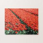 Campo de tulipanes rompecabezas