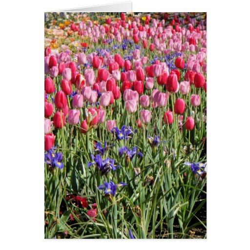 campo de tulipanes tarjeta