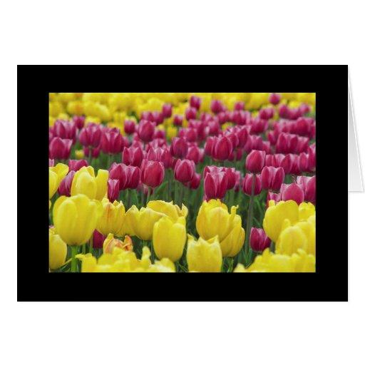 Campo de tulipanes tarjeta de felicitación
