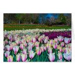 Campo de tulipanes tarjetón