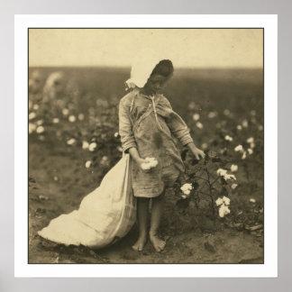 Campo del algodón póster