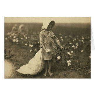 Campo del algodón tarjeta