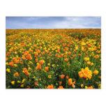 Campo del amarillo, el condado de Marion, Oregon Postal