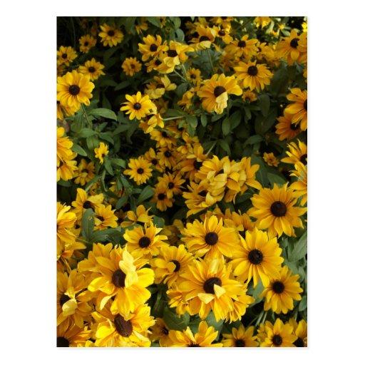 Campo del amarillo postal