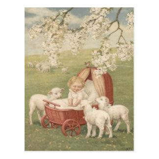 Campo del árbol de Dogwood del cordero del bebé Postal