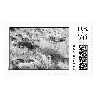 Campo del basalto - sello grande