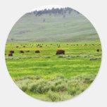Campo del búfalo pegatinas redondas