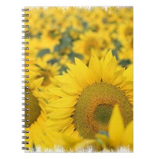 Campo del cuaderno de los girasoles