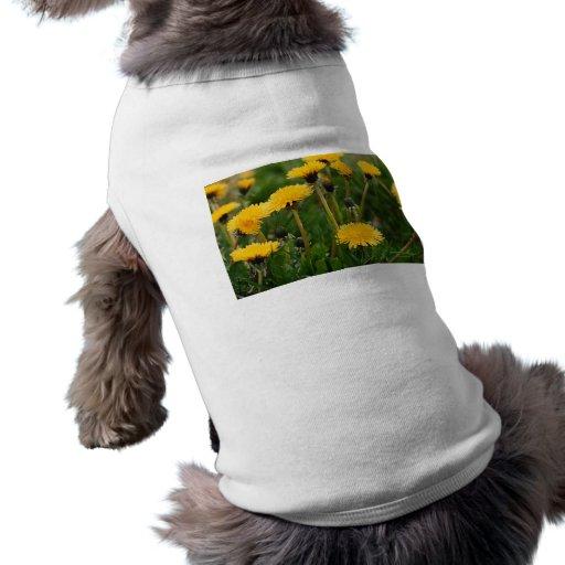 Campo del diente de león camisa de perro