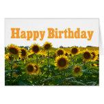 Campo del girasol del feliz cumpleaños felicitaciones