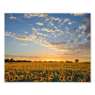 Campo del girasol en la puesta del sol fotografías