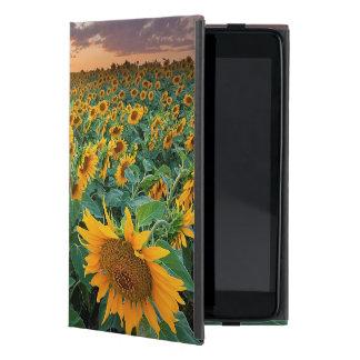 Campo del girasol en Longmont, Colorado iPad Mini Carcasa