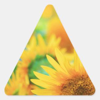Campo del girasol pegatina triangular
