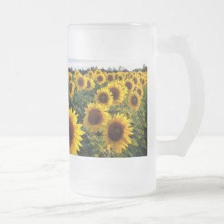 Campo del girasol taza de cristal