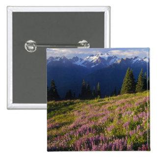 Campo del lupine, del monte Olimpo, y de nubes en