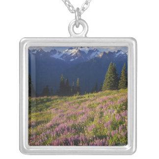 Campo del lupine, del monte Olimpo, y de nubes en Collar Plateado