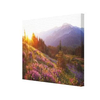 Campo del lupine y de las montañas olímpicas en impresión en lienzo