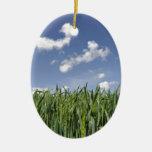 Campo del maíz joven ornamente de reyes