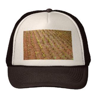 Campo del taro gorra