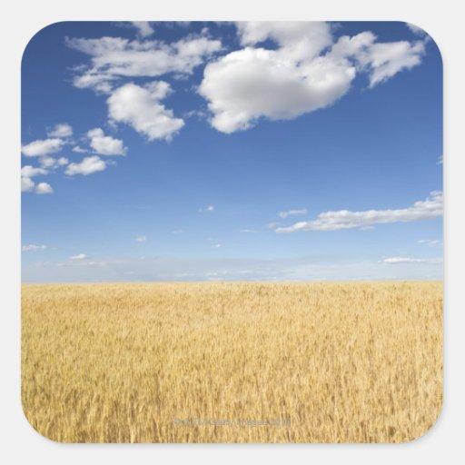 Campo del trigo pegatina cuadrada