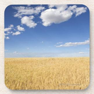 Campo del trigo posavasos de bebida