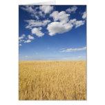 Campo del trigo tarjeta de felicitación