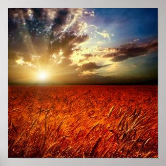 Campo del trigo y de la puesta del sol póster