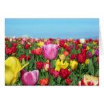 Campo del tulipán felicitacion