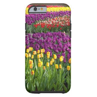 Campo del tulipán funda resistente iPhone 6
