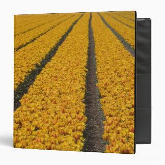 Campo del tulipán, los Países Bajos