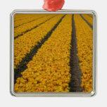 Campo del tulipán, los Países Bajos Adorno De Navidad