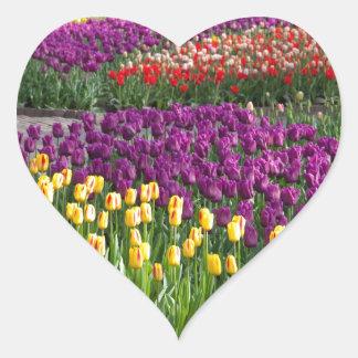 Campo del tulipán pegatina en forma de corazón