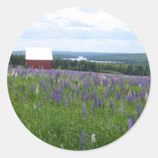 Campo Estocolmo, YO de los Lupines de Maine Etiquetas Redondas