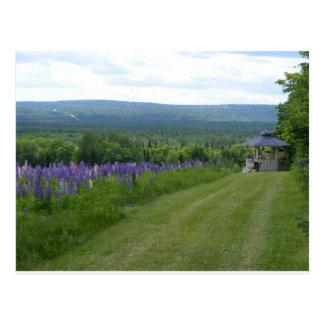 Campo Estocolmo, YO de los Lupines de Maine Postales