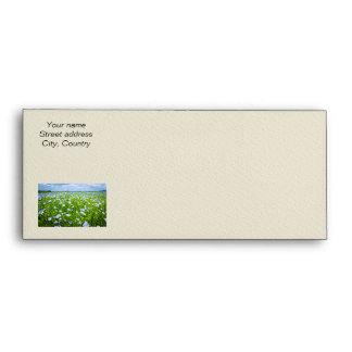 Campo floreciente del lino sobres