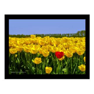 Campo holandés del tulipán tarjeta postal
