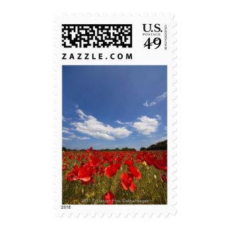Campo por completo de flores rojas sellos