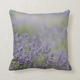 Campo púrpura de la lavanda de la foto hermosa del almohadas