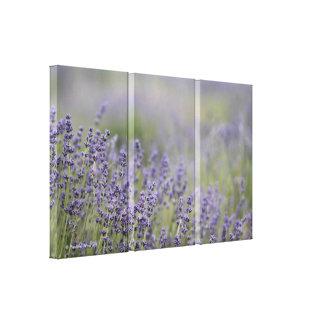 Campo púrpura de la lavanda de la foto hermosa del impresión en tela