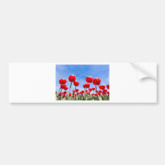 Campo rojo de los tulipanes de debajo con el cielo pegatina para auto