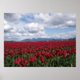 Campo rojo del tulipán posters