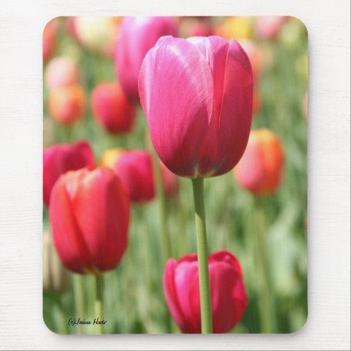 Campo rojo y amarillo de tulipanes tapetes de ratón