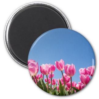 Campo rosado de los tulipanes con el cielo azul imán redondo 5 cm