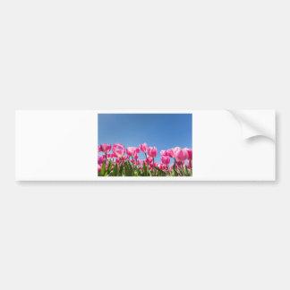 Campo rosado de los tulipanes con el cielo azul pegatina para auto