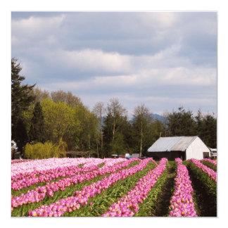 Campo rosado del tulipán invitación